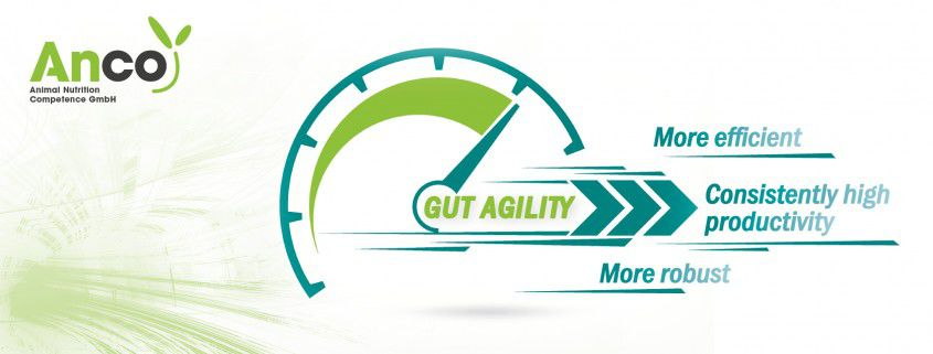 Pig international publication gut agility