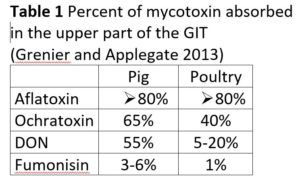 mycotoxin absoprtion - gut