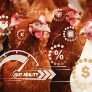 agile - laying hens - gut agility