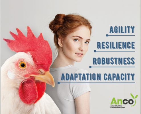 resilience - anco fit poultry - robustness - agility
