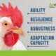 robustness - Anco FIT Poultry