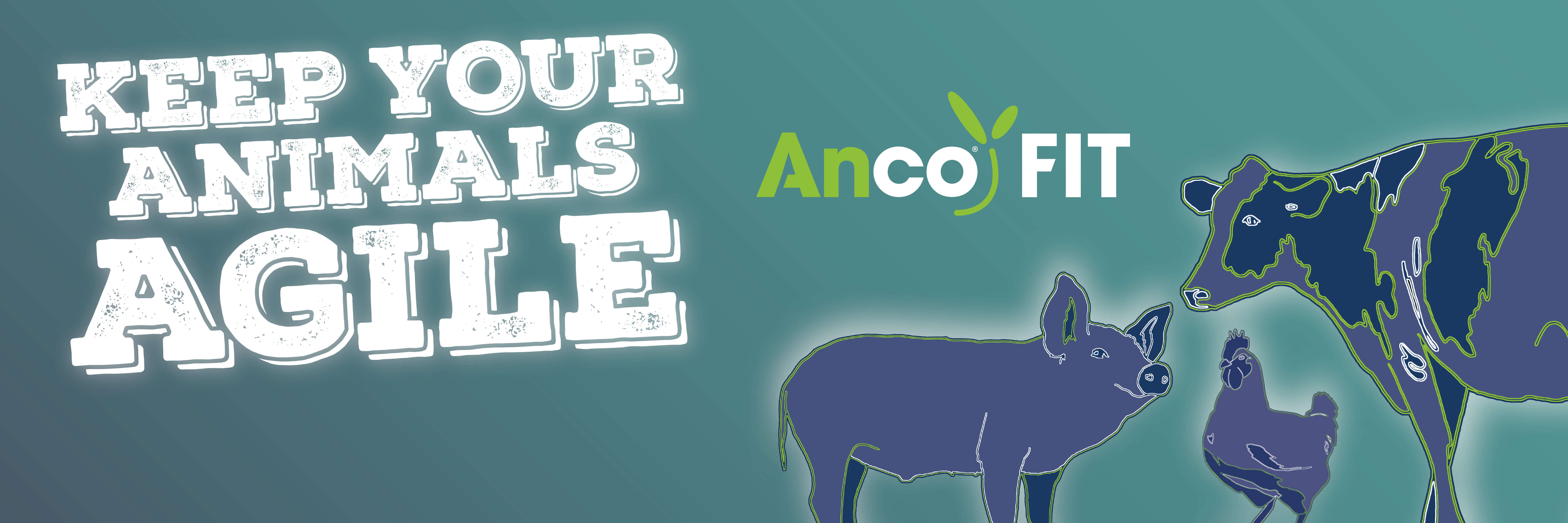 anco fit gut agility activator
