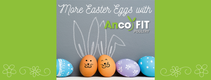 easter eggs - anco fit poultry