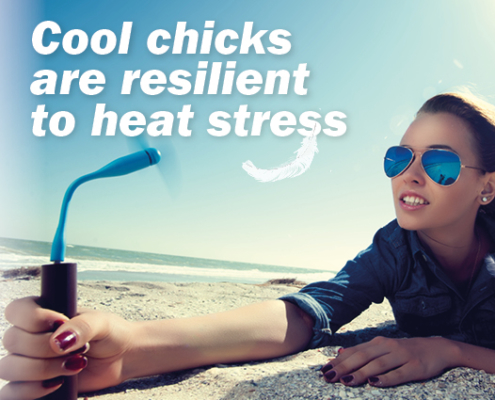 anco fit poultry - heat stress -#heatawarenessday