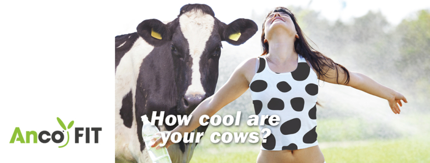 heat stress - dairy cows
