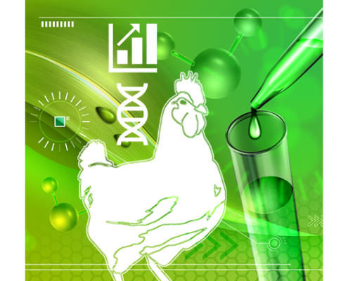 animal production science - anco fit poultry - plant extracts