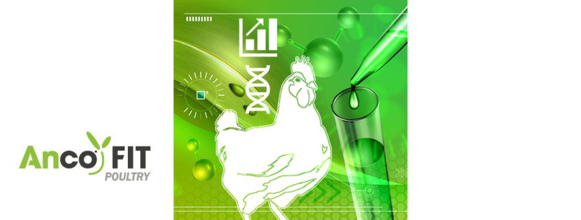 animal production science - animal nutrition - anco fit poultry
