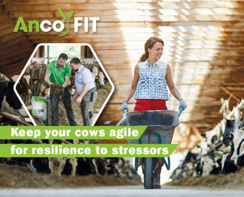 anco FIT - dairy farming - resilience