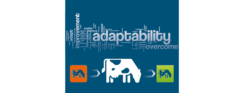 adaptive capacity - transition period - dairy cows