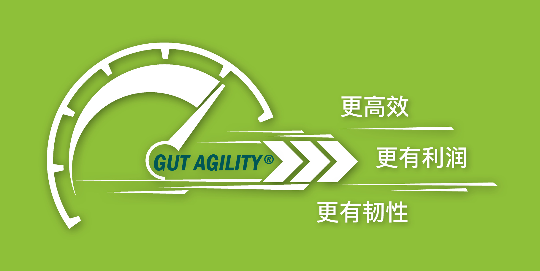 gut acility - anco fit