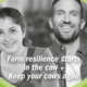 resilience in dairy cows - gut agility