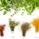 plant extracts - herbs and spices